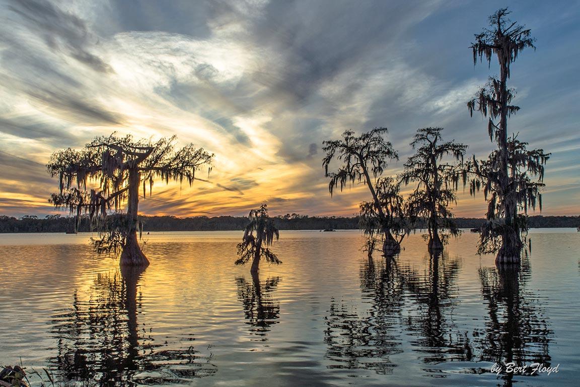 Sunset: Lake Martin, Louisiana