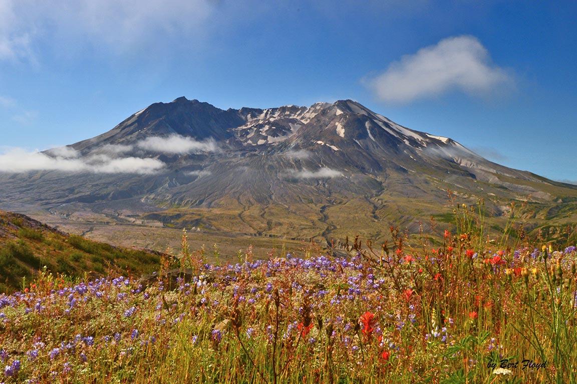 Rebuilding: Mount Saint Helens, Washington